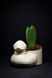 Penchez le mini pot de fleurs avec la fleur de coeur rentrée le studio Photos stock