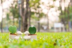 Penchez le mini pot de fleurs avec la fleur de coeur sur le jardin Image stock