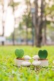 Penchez le mini pot de fleurs avec la fleur de coeur sur le jardin Photographie stock