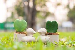 Penchez le mini pot de fleurs avec la fleur de coeur sur le jardin Images libres de droits