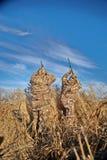 Penchez les chasseurs tirant dans le ciel le jour ensoleillé Photos libres de droits