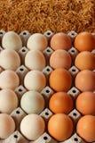 Penchez les oeufs et les oeufs de poulet Images libres de droits