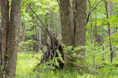 Penchez-vous à dans les bois images libres de droits