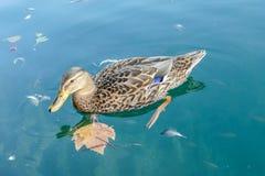 penchez-vous dans l'eau, photo numérique de photo comme fond photographie stock libre de droits