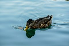 penchez-vous dans l'eau, photo num?rique de photo comme fond photo libre de droits