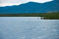 Penchez-vous dans un lac de montagne dans les Monts Oural Photo libre de droits