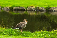 Penchez-vous sur un pré près du petit lac en parc photos stock