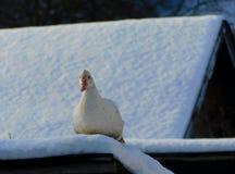 Penchez-vous sur un toit neigeux d'un cotet photos stock