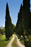Pencil Cypress tree lined lane - France. A narrow cypress tree-lined lane in rural France. Near Uzes in Languedoc Roussilion Cupressus sempervirens or stock images