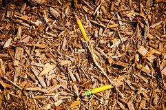 Pencil Died stock image
