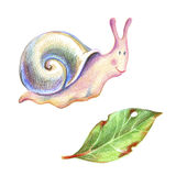 Pencil drawind smiling colorful snail and a leaky leaf. Pencil illustration. Smiling colorful snail and a leaky leaf isolated on white background Royalty Free Stock Image