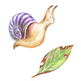 Pencil drawind smiling colorful snail and a leaky leaf. Pencil illustration. Smiling colorful snail and a leaky leaf isolated on white background Stock Photography
