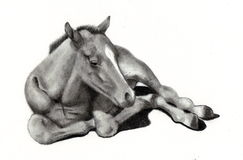 Pencil Drawing of Baby Horse Stock Photos