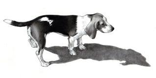 Pencil Drawing of a Beagle Dog. An original pencil drawing of a Beagle casting a long shadow Stock Images