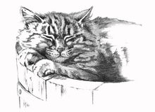 Pencil drawing of cat. Pencil drawing of sleeping tabby cat in wooden cask flower pot Stock Photography