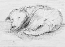 Dog Sleeping. Pencil Drawing of dog Sleeping Stock Image