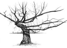 Pencil Drawing of a Gnarled Old Bare Tree royalty free illustration