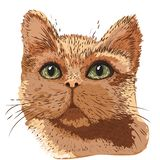 Pencil drawing head of a ginger cat vector illustration