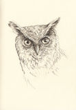 Pencil drawing head owl Stock Image