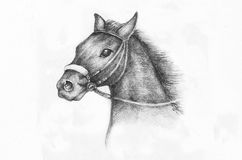 Pencil Drawing of a horse. Detail of a horse etude, pencil drawing on white paper artist at age of 15 Stock Photos
