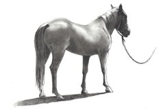 Pencil Drawing of Horse with Bridle and Rope. A pencil drawing of a horse seen from the rear and side Royalty Free Stock Photos