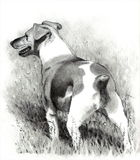Pencil Drawing of Jack Russell Terrier Dog. A realism pencil drawing of a Jack Russell Terrier Stock Images