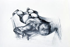 Pencil drawing of man body. Pencil drawing of human anatomy of man body royalty free stock photos