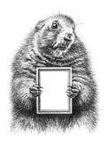 Pencil drawing of a marmot Royalty Free Stock Photography
