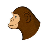 Pencil drawing monkey,vector illustration Royalty Free Stock Photos
