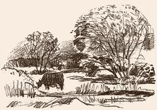 Pencil Drawing Of A Rural Landscape With A Grazing Cow Royalty Free Stock Photo