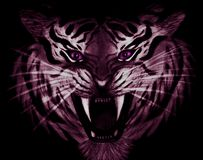 Pencil Drawing Of Closeup Of A Menacing White And Purple Tiger With Violet Eyes Isolated On Black Background