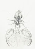 Pencil drawing on old paper. Ornamental flower. Pencil drawing on old paper. Ornamental flower Royalty Free Stock Image