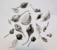 Pencil drawing of pears, apples and leaves Royalty Free Stock Images