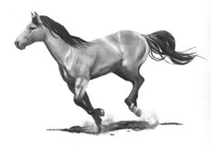 Pencil Drawing of Running Horse. This is a graphite pencil drawing of a horse galloping or running at full speed stock images