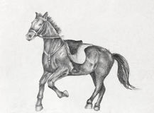 Pencil Drawing of a Running Horse. Scetch of a running horse, pencil drawing on white paper artist at age of 15 Royalty Free Stock Photos