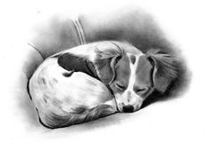 Pencil Drawing of a Sleeping Dog. A realism pencil drawing of a dog sleeping on the couch Stock Photo