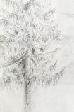 Pencil drawing spruce on old paper background. Royalty Free Stock Photography