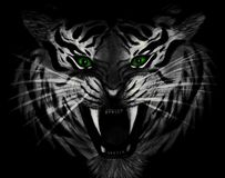 Pencil drawing of closeup of a menacing white tiger with green eyes isolated on black background. Portrait of an angry and ferocious big illuminated feline Royalty Free Stock Images