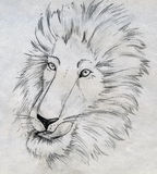 Lion sketch. Pencil drawn sketch of a male lion's head and mane Stock Photo