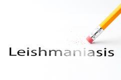 Pencil with eraser. Closeup of pencil eraser and black leishmaniasis text. Leishmaniasis. Pencil with eraser Stock Photography