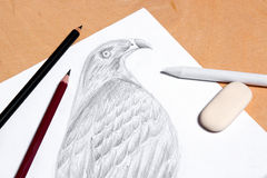 Pencil, eraser and stamp with graphite drawing hawk. Royalty Free Stock Image