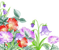Pencil illustration of a flower bed Stock Photo