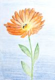 Pencil sketch of Calendula flower Stock Photo