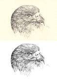 Pencil sketch head golden eagle Royalty Free Stock Photo