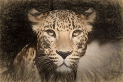 Pencil sketch with the image of a leopard Stock Image