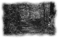 A pencil sketch of a wooded path. A pencil sketch of a wooded path in black and white Royalty Free Stock Photos