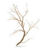 Pencil tree shaped Stock Photo