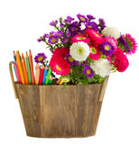 Pencils and aster flowers Royalty Free Stock Image