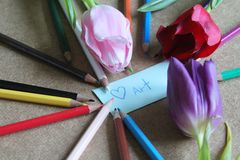 Pencils and tulips Royalty Free Stock Image