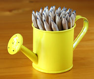Pencils in Watering Pot. Sharpened wooden graphite pencils group in small yellow watering can Royalty Free Stock Photography